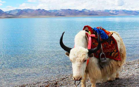 10 Days Everest Base Camp with Lake Namtso Small Group Tour